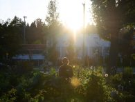 An image of a person standing in the Riley Park Community Garden, silhouetted by the sun