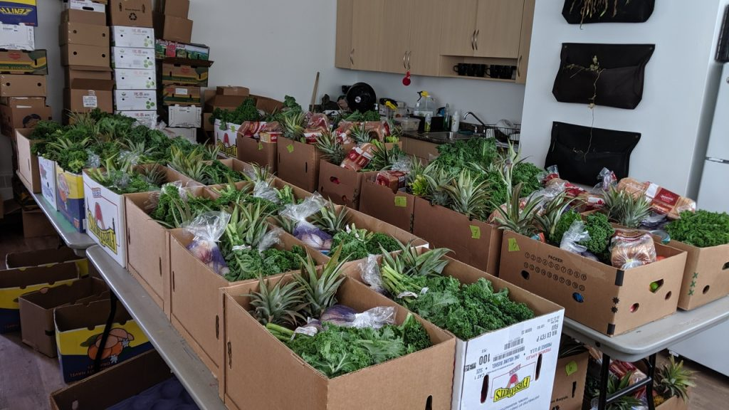 An image of many cardboard boxes filled with fresh green veggies