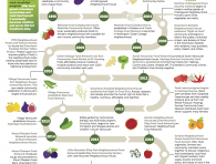 An image of an infographic detailing the history of Vancouver Neighbourhood Food Networks, from 1995 to 2019 and beyond